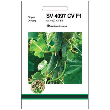 Огірок SV 4097 CV F1