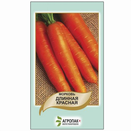 Середньопізня морква сорту Довга червона.